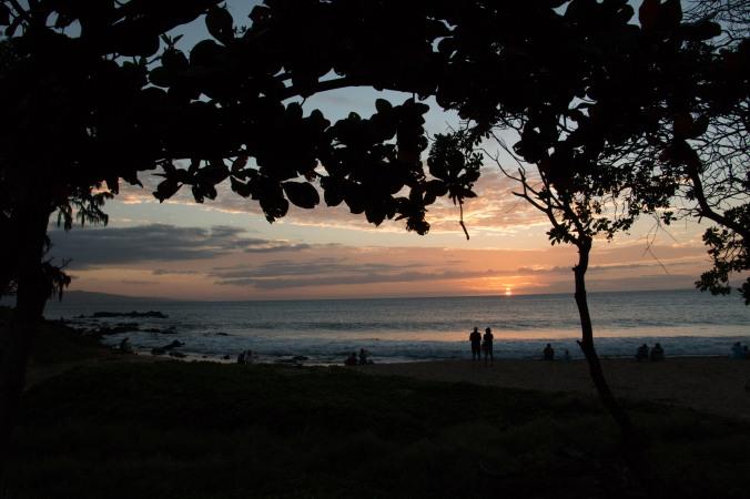 Maui-Aussie 1